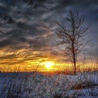 Одинокое дерево на закате... :: Александр Бойко