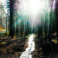 Тюрингский лес............. :: Александр Селезнев