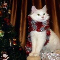Кот и Новый год :: Елена Грошева
