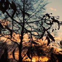 Краски зимы :: Swetlana V