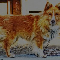 грустная собака соседа Александера :: Роза Бара