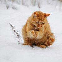 Котовы хлопоты . :: Иван