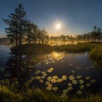 Лунная бухта кувшинок :: Фёдор. Лашков