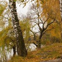 Вспоминая осень ... :: Ольга Винницкая (Olenka)