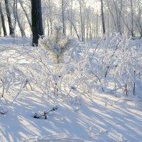 Солнышко и зимой радует :: Владимир