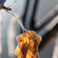 Замерзающая осень. :: Виктор Иванович
