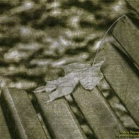 Кленовый лист в Летнем саду :: Valeriy Piterskiy