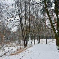 Снежок  выпал.Запахло зимой... :: Anatoley Lunov