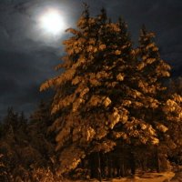 Ночь в лесу. :: Галина Полина