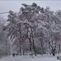 В нашем дворе минувшим январём :: Нина Корешкова