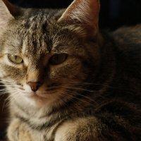 Кошка :: Александр Кубасов