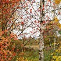 Поздняя осень. :: Paparazzi