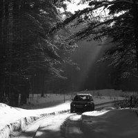 Дачная дорожка. :: Александр Гурьянов
