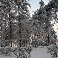 Потеплело.... :: Наталья Тимофеева