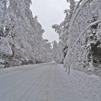 Зима :: Игорь Максименко