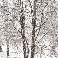 Зимняя графика :: Андрей K.