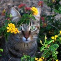 Гламурный котик :: Надя Кушнир