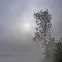Десногорское водохранилище :: Aleksandr Ivanov67 Иванов