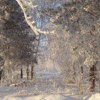 Опустив мохнатые ресницы, дремлет в тишине дремучий лес... :: Елена Ярова