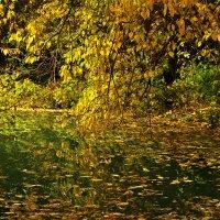 Склонилась ветка над прудом... :: Светлана