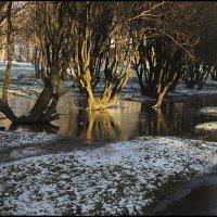 Январские разливы :: galina bronnikova