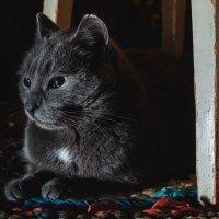 Все любят котиков :: maxihelga ..............