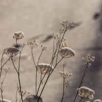 зимние цветы... :: Наталья Маркова