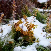 палисад под снегом :: Александр Прокудин