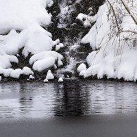 Черно-белая природа :: Ирина Масальская