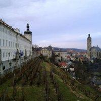 Старые виноградники :: Мария Кондрашова