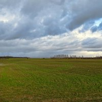 Озимое поле в январе :: Милешкин Владимир Алексеевич