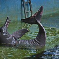 Розовый дельфин :: Svetlana Plasentsiia
