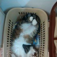 Магазинный кот :: Евгений Зубков