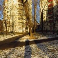 На помойку надо выбрасывать такие зимы! :: Андрей Лукьянов