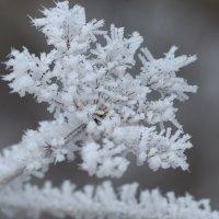 Ледяные цветы :: Swetlana V