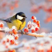 Зимние краски :: Влад