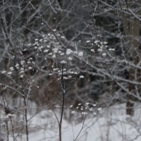 зимний букет :: Михаил Жуковский