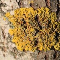 Украшения деревьев :: ninell nikitina