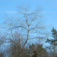 Деревья :: Виталий Купченко
