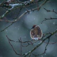 Гадание на снежинках :: Ксения Соварцева
