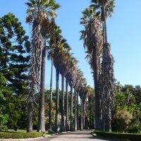 Белем. Ботанический сад. :: Таэлюр