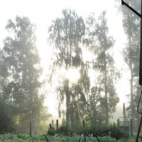Утро :: Ольга Беляева