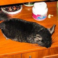 После вкусного обеда... очень хочется поспать! :: Александр Куканов (Лотошинский)