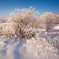 Зимняя зарисовка :: Анатолий Иргл
