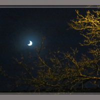 Зимней ночью :: super-krokus.tur ( Наталья )