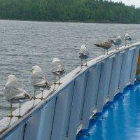 Чайки провожают туристов :: Александр
