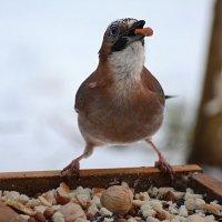 вкусно! :: linnud