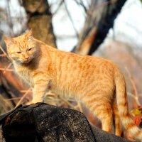 Изображая тигра . :: Иван