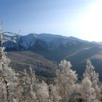 Борус зимой :: Евгения Шикалова