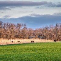 Сельский пейзаж . :: Va-Dim ...